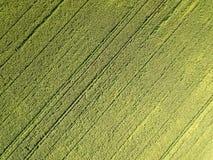 Fotografía aérea del abejón El volar sobre el campo de maíz Imagen de archivo libre de regalías
