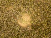 Fotografía aérea del bosque del abedul imagenes de archivo