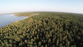 Fotografía aérea en la reserva en Bielorrusia Vuelo sobre el lago y el bosque 7 metrajes