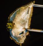 Fotografía aérea en parte de una isla Nevado en invierno Fotos de archivo libres de regalías