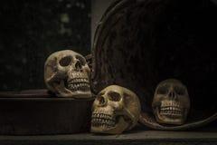 Fotografía con el cráneo de un cráneo humano Imágenes de archivo libres de regalías