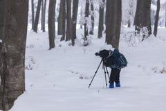 Fotografía de árboles y del bosque Fotos de archivo libres de regalías