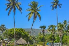 Fotografía de la broche del árbol de coco a distancia durante tiempo de la celebración del día de fiesta de la Navidad o del Año  Fotografía de archivo libre de regalías