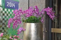 Fotografía de la decoración interior, pintura, aún vida, etc Flores hermosas Imágenes de archivo libres de regalías