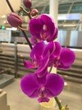 Fotografía de la decoración interior, pintura, aún vida, etc Flores hermosas Imagen de archivo libre de regalías
