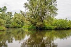 Fotografía de la descripción de una reserva de naturaleza holandesa grande del humedal Foto de archivo libre de regalías