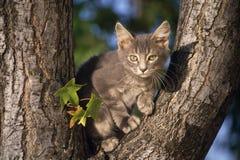Fotografía de la fauna Imágenes de archivo libres de regalías