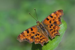 Fotografía de la macro de la mariposa foto de archivo libre de regalías