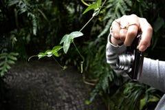 Fotografía de la macro de la naturaleza Imagen de archivo