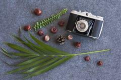 Fotografía de la naturaleza flatlay Imagen de archivo libre de regalías
