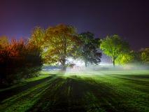 Fotografía de la noche de una sola luz brillante que hace excursionismo árboles en muchos colores fotos de archivo libres de regalías