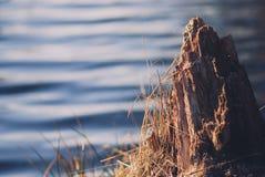 Fotografía de los troncos de un árbol muertos que pegan hacia fuera el agua en el fondo del lago Imágenes de archivo libres de regalías
