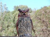Fotografía de Owl Decoy falso plástico Fotos de archivo libres de regalías