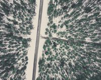 Fotografía del abejón de un camino entre el bosque en el invierno - lo del vintage Fotos de archivo libres de regalías