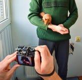 Fotografía del animal doméstico Imagenes de archivo