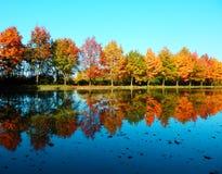Fotografía del detalle de la reflexión de los árboles en el agua Fotos de archivo