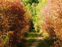 Fotografía del detalle del callejón otoñal de los arbustos Fotografía de archivo