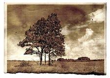 Fotografía del envejecimiento Imagen de archivo libre de regalías