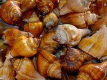 Fotografía del fondo de los caracoles de mar Foto de archivo