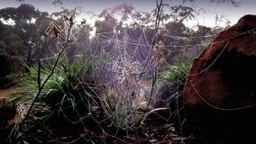Fotografía del fondo del web de araña Foto de archivo libre de regalías