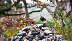 Fotografía del pájaro Fotografía de archivo libre de regalías