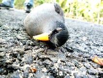 Fotografía del pájaro Foto de archivo