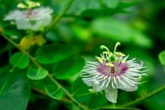 Fotografía del primer de la flor blanca Imagen de archivo libre de regalías