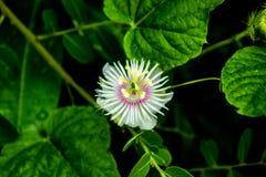 Fotografía del primer de la flor blanca Foto de archivo libre de regalías