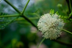 Fotografía del primer de la flor blanca Fotos de archivo