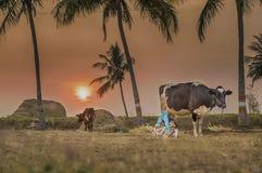Fotografía del pueblo del nanu del tamil de la India de la fotografía de la calle de Salem fotografía de archivo