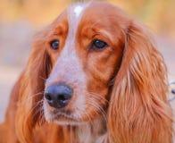 Fotografía hermosa del animal doméstico foto de archivo