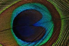 Fotografía macra de la pluma del pavo real foto de archivo