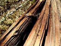 Fotografía macra de poste de madera agrietado Imagen de archivo libre de regalías
