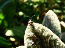 Fotografía macra de un escarabajo amarillo y negro Imagen de archivo