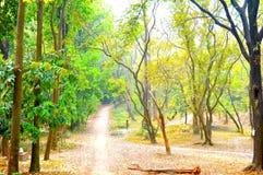 Fotografía macra en el jardín con árboles impresionantes Fotos de archivo