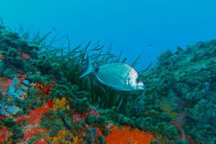 Fotografía subacuática Foto de archivo libre de regalías
