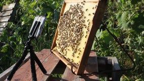 Fotografía y videografía de abejas almacen de video