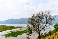 Fotografíe los árboles coloreados otoño en la orilla del lago Pokhara en Katmandu Nepal Fotos de archivo