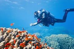 Fotograf auf dem Korallenriff Stockbild