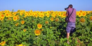 Fotograf auf einem Sonnenblume-Gebiet Stockbilder