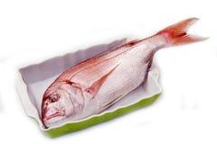 Fotograf czerwieni ryba Zdjęcia Stock