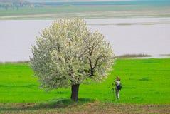 Fotograf, der Frühlingsbaum fotografiert stockbild