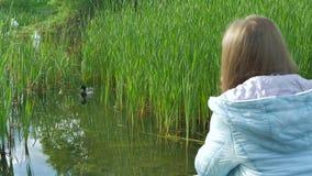 Fotograf dziewczyna bierze fotografie dzika kaczka z fachową kamerą na bankach rzeka i łabędź zdjęcie wideo