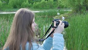 Fotograf dziewczyna strzela wideo łabędź z fachową kamerą na bankach rzeka zbiory wideo