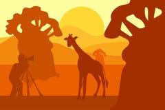 Fotograf fotografuje żyrafy w naturze royalty ilustracja