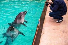 Fotograf macht Fotos von netten Delphinen stockbilder