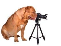 Fotograf mit Fotokamera Lizenzfreie Stockfotos