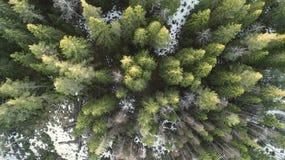 Fotograf?a a?rea de un bosque en invierno foto de archivo