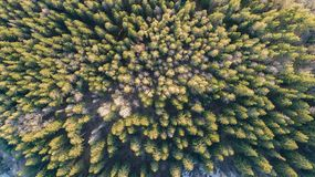 Fotograf?a a?rea de un bosque en invierno imágenes de archivo libres de regalías