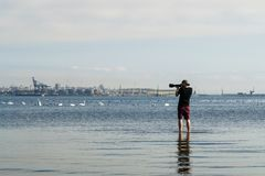 Fotograf som tar bilder av en grupp av svanar arkivfoto